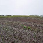 Campos de Herminia Terreno inicial